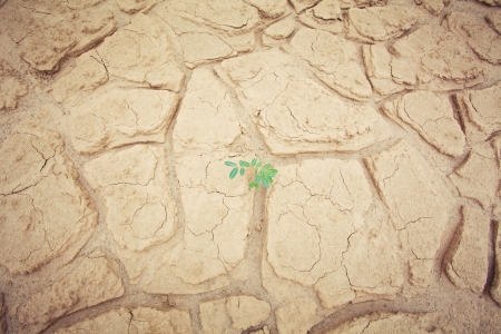Green plant growing trough sand of the desert photo
