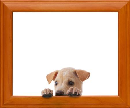 Hund mit leeren Rahmen auf weißem Hintergrund Standard-Bild - 13880544