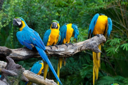 colorful macaws sitting in a tree photo