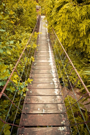 crossing: Rope walkway through the treetops in a rain forest