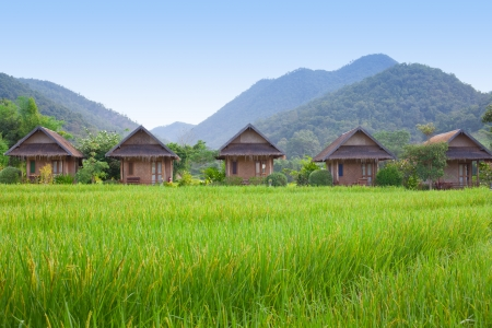 Village with green field in Pai Maehongson ,Thailand photo