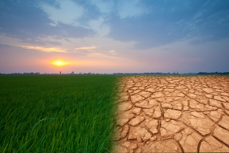 landscape with beautiful sunset and dry field