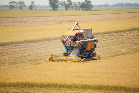 Farm worker harvesting rice with Combine machine in rice field photo