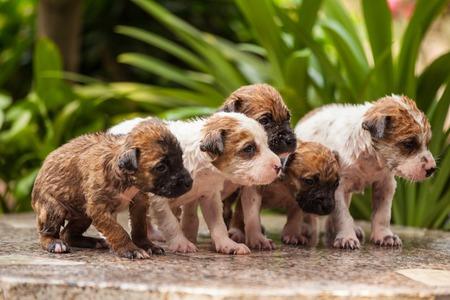 Close up of washing five puppy dog photo
