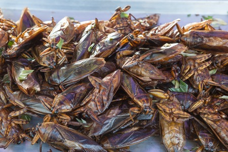 maggot: The exotic food menu in thailand is fried insect