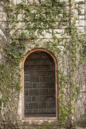 old windows: Windows on a wall covered with grapes vine