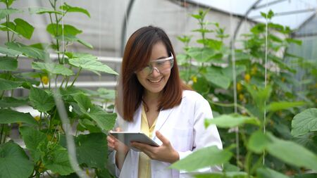 Asian woman science researching in hydro melon farm