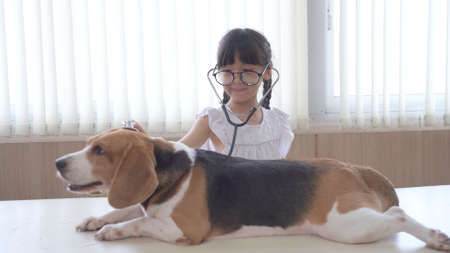 Little child girl playing doctor with her small cute dog at table Vet Clinic Examines Dog Standard-Bild
