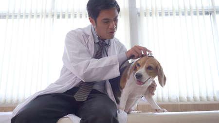 Veterinarian doctor and a labrador puppy at vet ambulance Standard-Bild