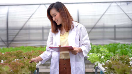 Asian woman science researching in hydro farm Standard-Bild