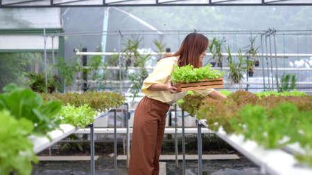 Portrait of asian woman harvesting fresh vegetables in hydro farm