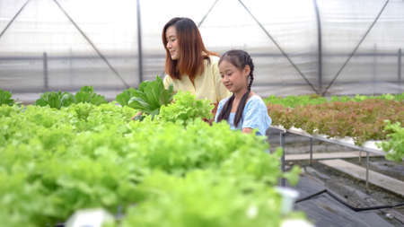 Mother With Daughter Harvesting Organic vegetable On Farm Standard-Bild