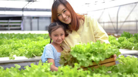 Mother With Daughter Harvesting Organic vegetable On Farm Editorial