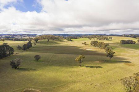 Ovejas en un campo de hierba verde en el interior de Australia
