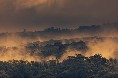 Rain mist and low cloud over gum trees in a valley in rural New South Wales in Australia. Stok Fotoğraf
