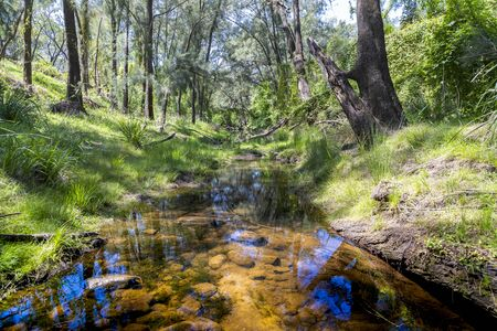 A creek running through a forest of green trees in the sunshine. Фото со стока