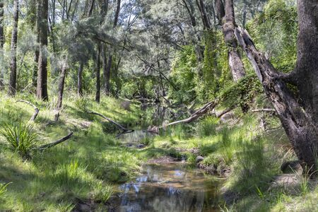 A creek running through a green forest of trees and bushes.