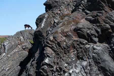 A goat standing on a rock in front of a bright blue sky in the Greek Islands.