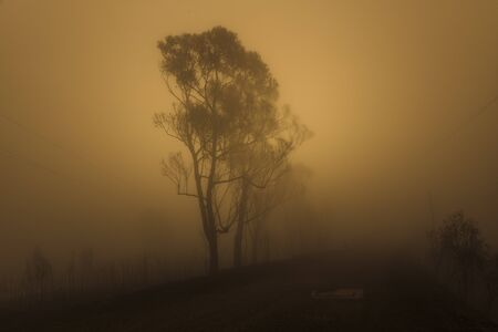 Gum trees in thick fog affected by bushfire in The Blue Mountains in Australia