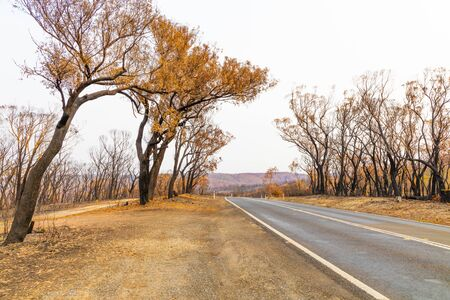A country road amongst severely burnt Eucalyptus trees after a bushfire in The Blue Mountains Foto de archivo