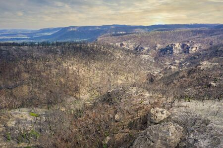 Forest regeneration after the severe bush fires in The Blue Mountains in Australia 写真素材