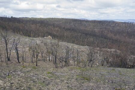 A forest burnt by bush fire in Australia beginning to regenerate