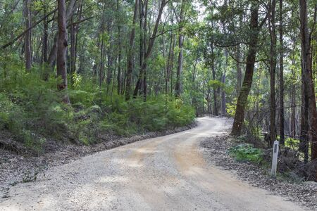 A dirt track in the Wollemi National Park in regional New South Wales Stock Photo