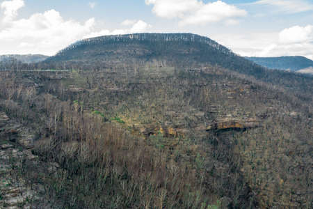 Aerial view of forest regeneration after severe bushfires in The Blue Mountains in Australia