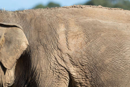 Close up of an old elephant and their wrinkly skin Stock Photo