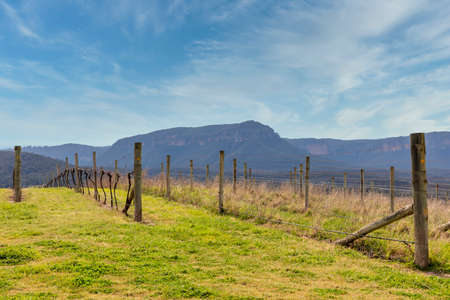 Photograph of grape vines and Eucalyptus trees in the Megalong Valley in The Blue Mountains in Australia
