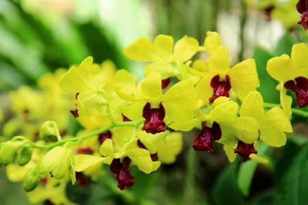 chiangmai: the thailand orchid at chiangmai royal flora Stock Photo
