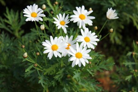 the thailand beautiful flower in garden Stock Photo - 15058468