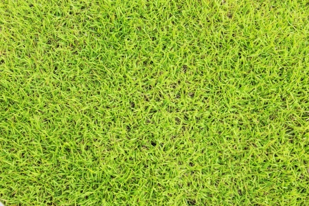 the green grass  background Stock Photo