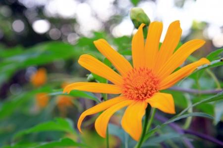 Orange Flower in the garden Stock Photo - 16521277