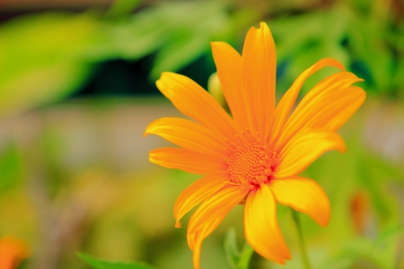 Orange Flower in the garden photo