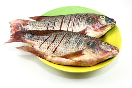 tilapia for cook on white background