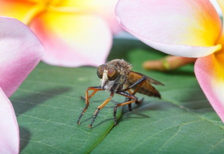 horsefly: horsefly with flower  Stock Photo