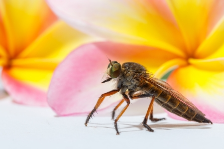 gad: horsefly with flower  Stock Photo