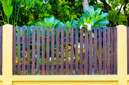 Wooden picket with white flower photo