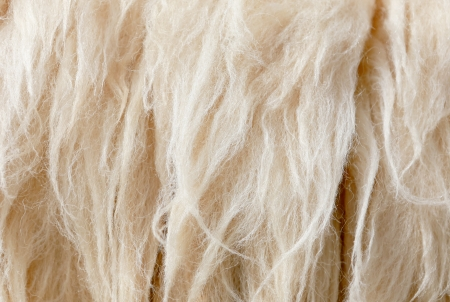 sheep fleece for texture background  photo