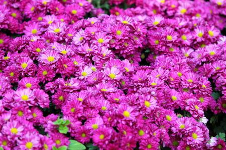flower blossom in garden photo