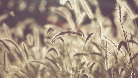Flower grass filed with retro color tone photo