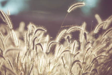 filed: Flower grass filed with retro color tone Stock Photo
