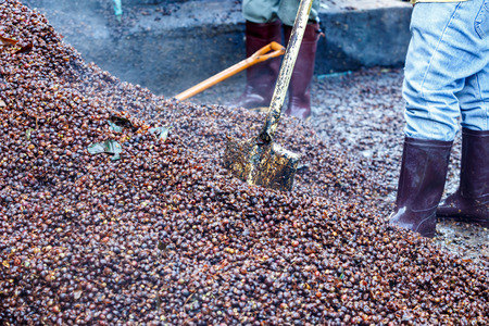 Bark of Coffee bean for make fertilizer Stock Photo