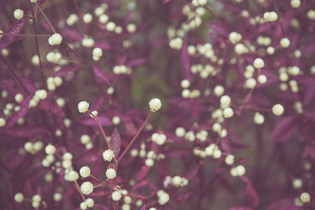 color tone: little Flower with retro color tone