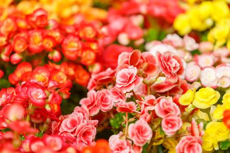 ful: Color ful little flower blossom in garden