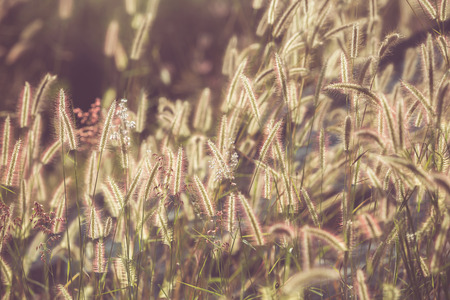 color tone: Flower grass filed with retro color tone Stock Photo