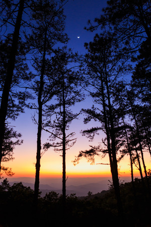 Twilight sky with silhouette pine tree photo