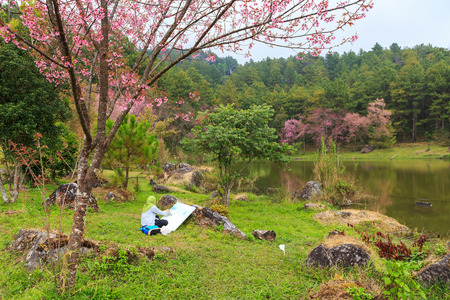 painter artist painting wild Himalayan Cherry spring blossom photo