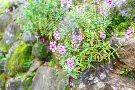 small flower: Stone wall with small flower Stock Photo